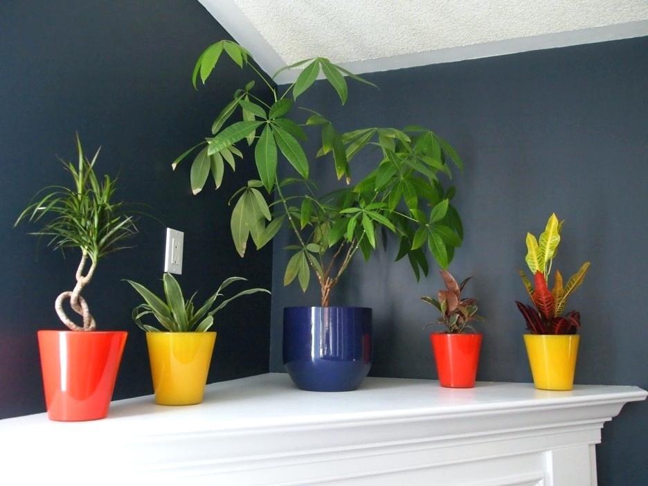 minimalist indoor plants colorful design