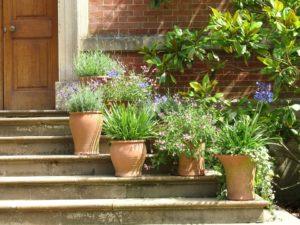 House front design with flower pots