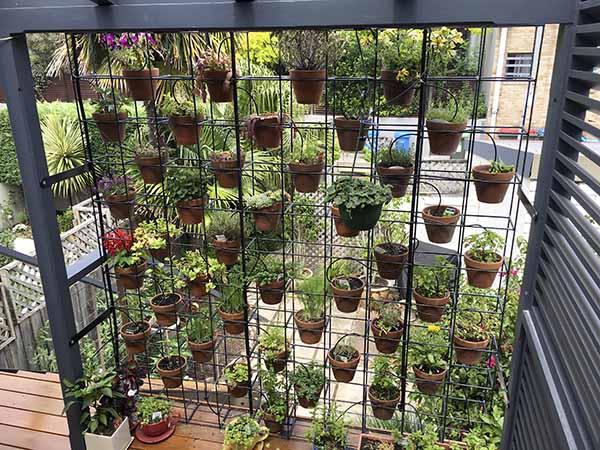 Straight Up Vertical Garden Minimalist Modern House
