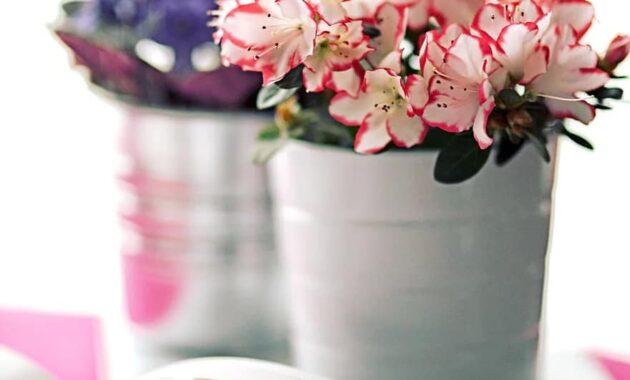 azalea white pot book flower houseplants