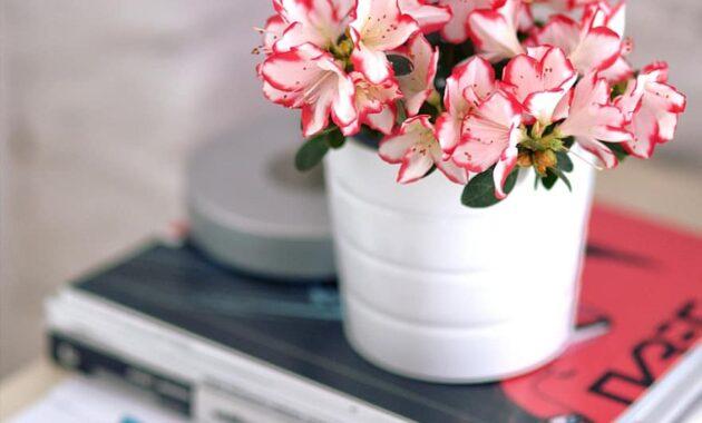 azalea white pot sunglasses houseplants plant flower home decor interior design