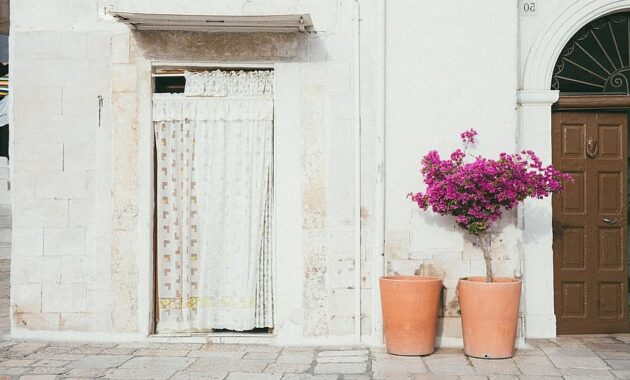 door wall flower pot curtain room house plant space