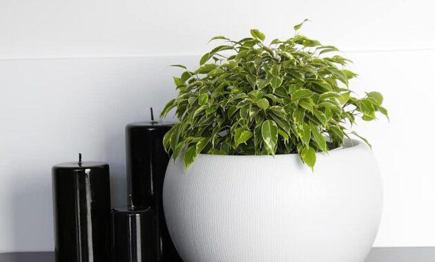 flower flower pot pots candle decor style