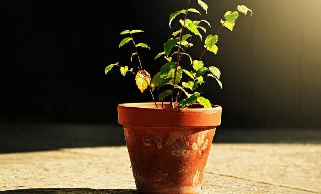 flower pot plant ceramic decoration