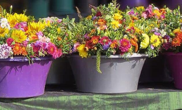 flowers flower pots plant colorful farbenpracht autumn deco fresh