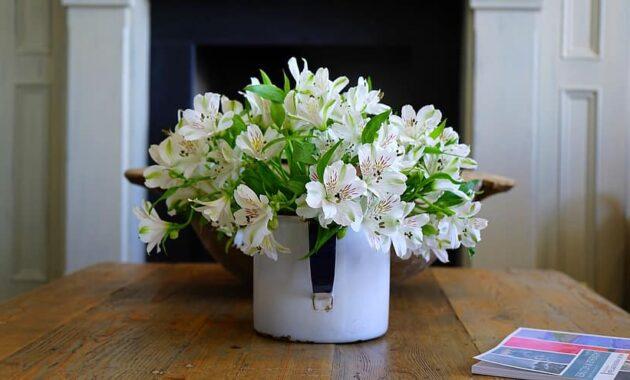 plant pot flower potted flowerpot fresh white flora home