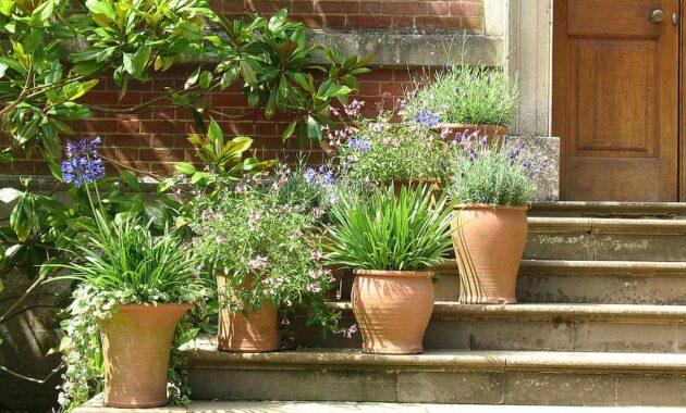 plants pots terracotta plant pot flowers steps garden