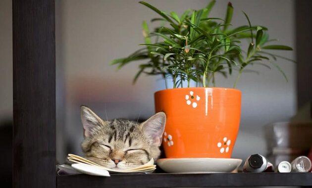 pot desktop flora leaf table cat flower
