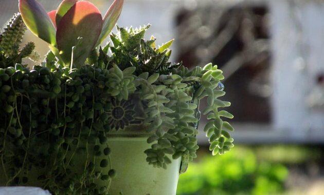 potted cactus potted succulants cactus succulent flower pot houseplant potted plant green flower pot