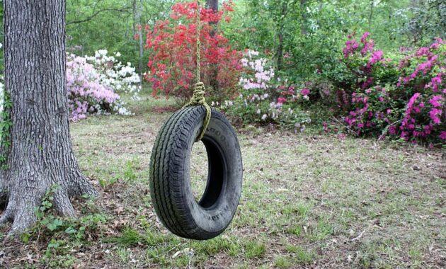tire swing azaleas backyard