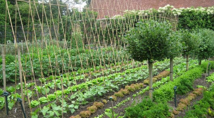 vegetable garden planner