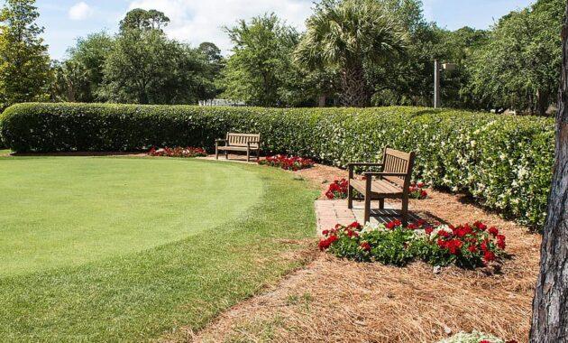 golf putting green green golf course course golfing sport grass leisure