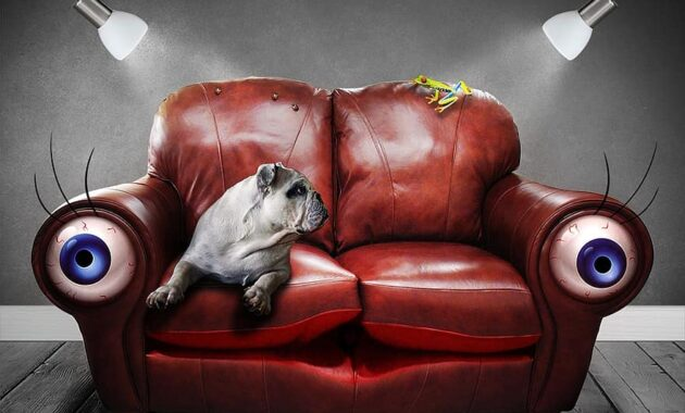 sofa couch surreal eyes dog art artificial dream perception