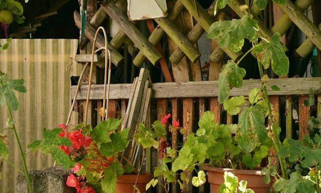 allotment idyllic garden garden gardening after work flower pots garden shed idyllic wild garden