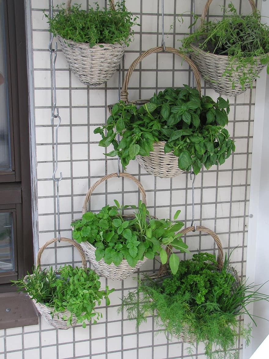 balcony herbs verkikaalipuutarha vertical planting planting baskets wall garden herb basil thyme