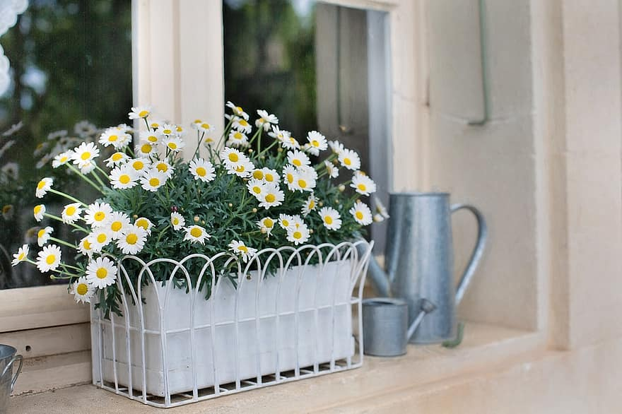 flower box planter daisies flowers watering can plant box nature decoration