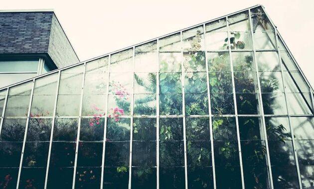 greenhouse conservatory gardening glasshouse botany botanical plant growth indoors