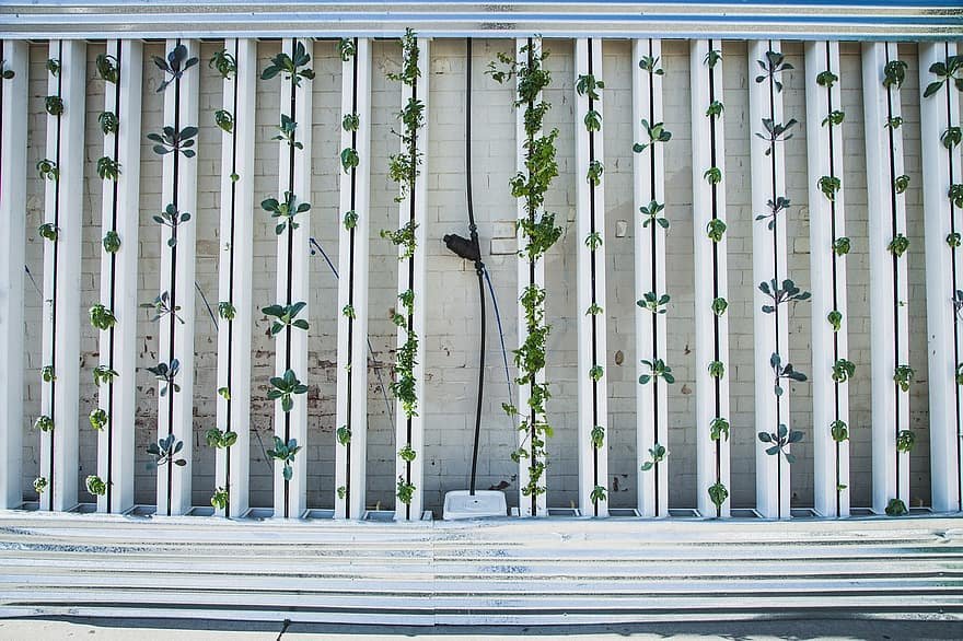 hydroponics green wall zipgrow vertical farm vertical garden lettuce