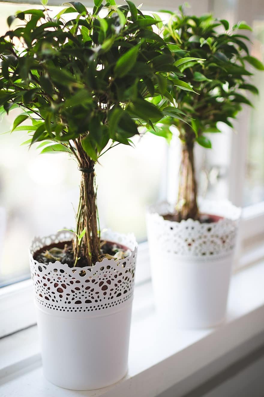 plants potted green nature gardening botany growth leaves fresh