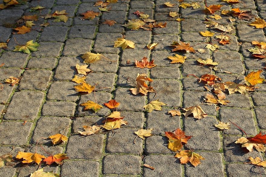 walkway pavers pavement foliage autumn surface pattern invoice the stones