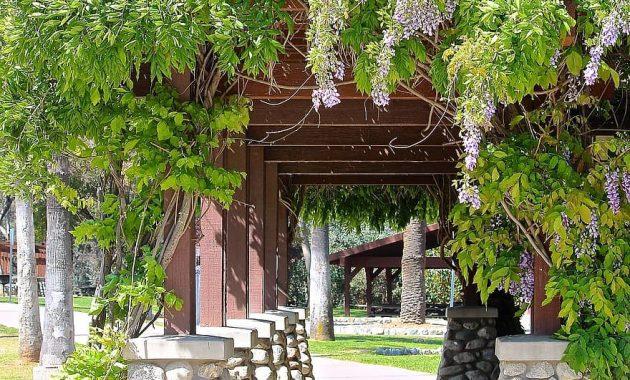 wisteria vine path arbor walk way shade patio flowers shrub