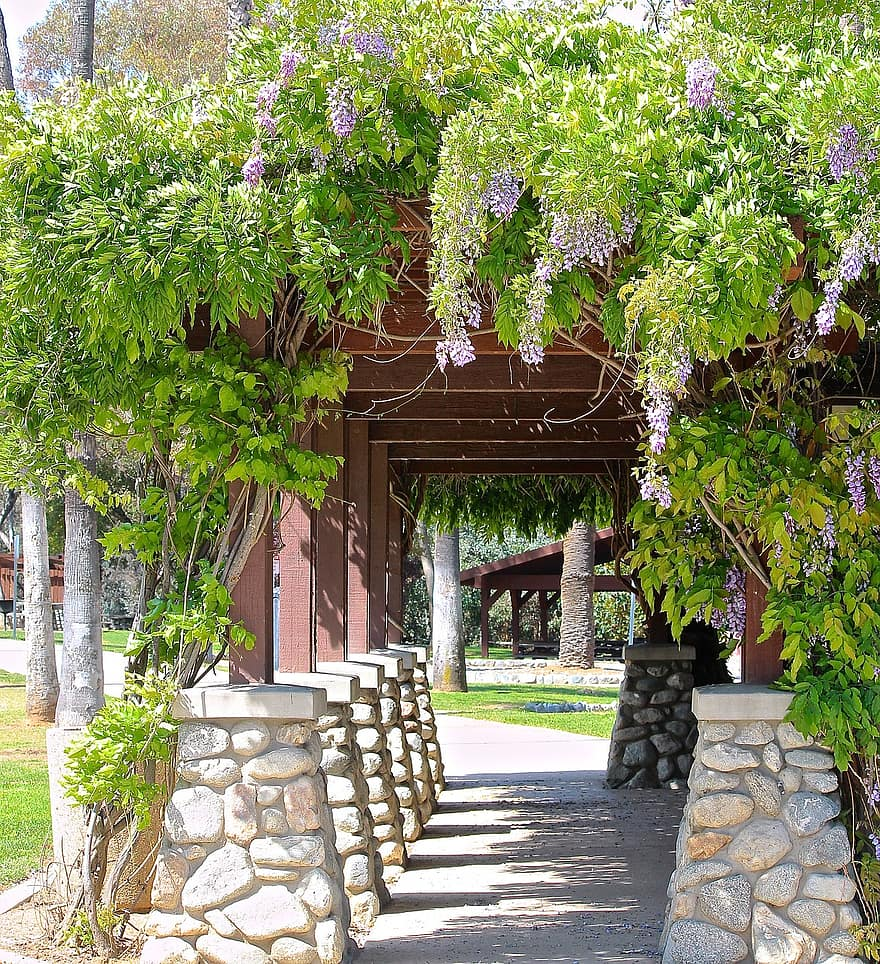 wisteria vine path arbor walk way shade patio flowers shrub