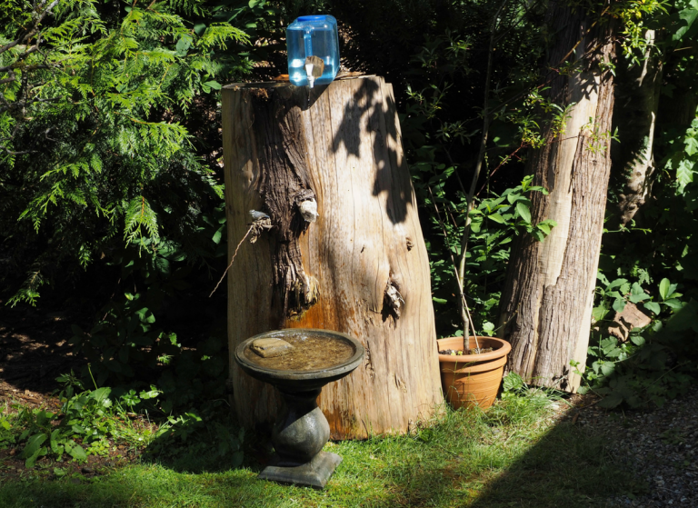 stunning Bird pool tree stump