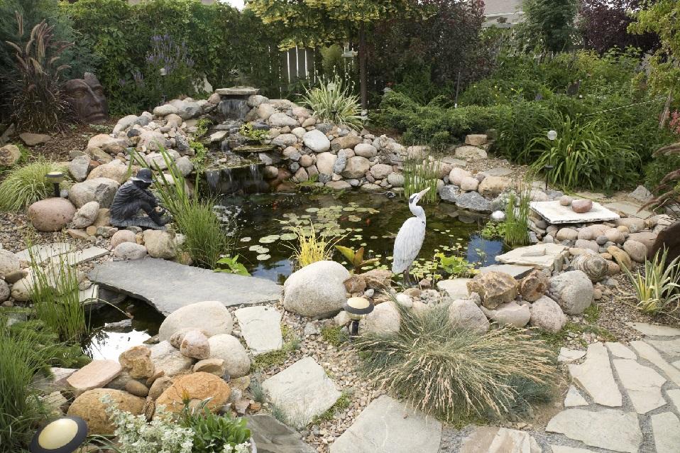 Beautiful fish pond Design
