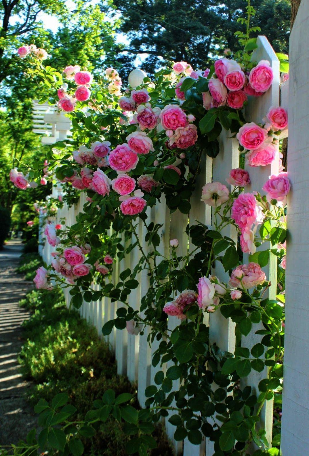 beautiful garden flowering