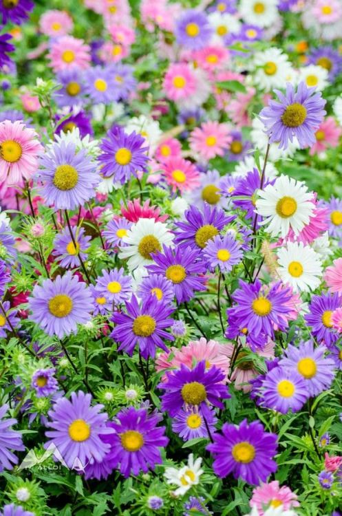 garden flowering ideas