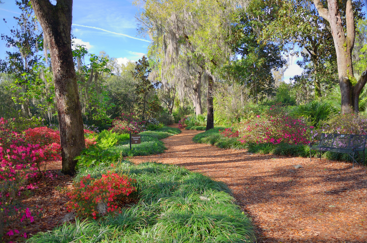landscaping ideas in florida for backyard