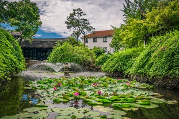 Japan garden with big pool and lotus