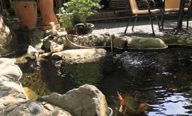 backyard fish pond ideas with koi