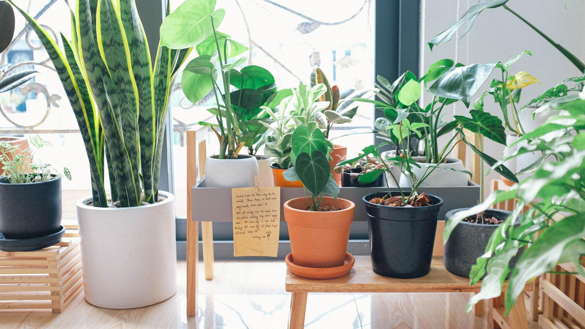 ideas for corner garden