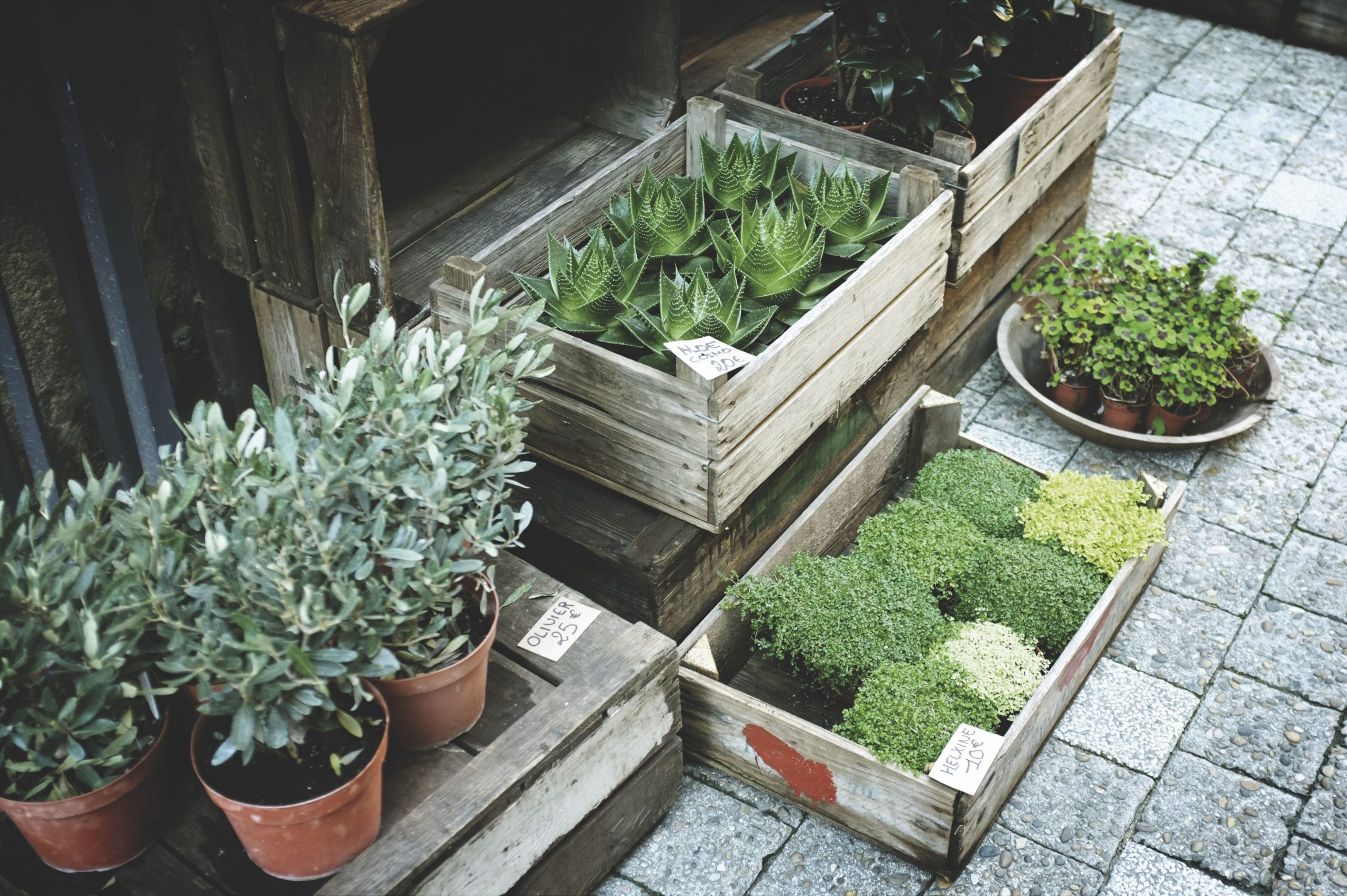 beautiful fence design with small pots decorations