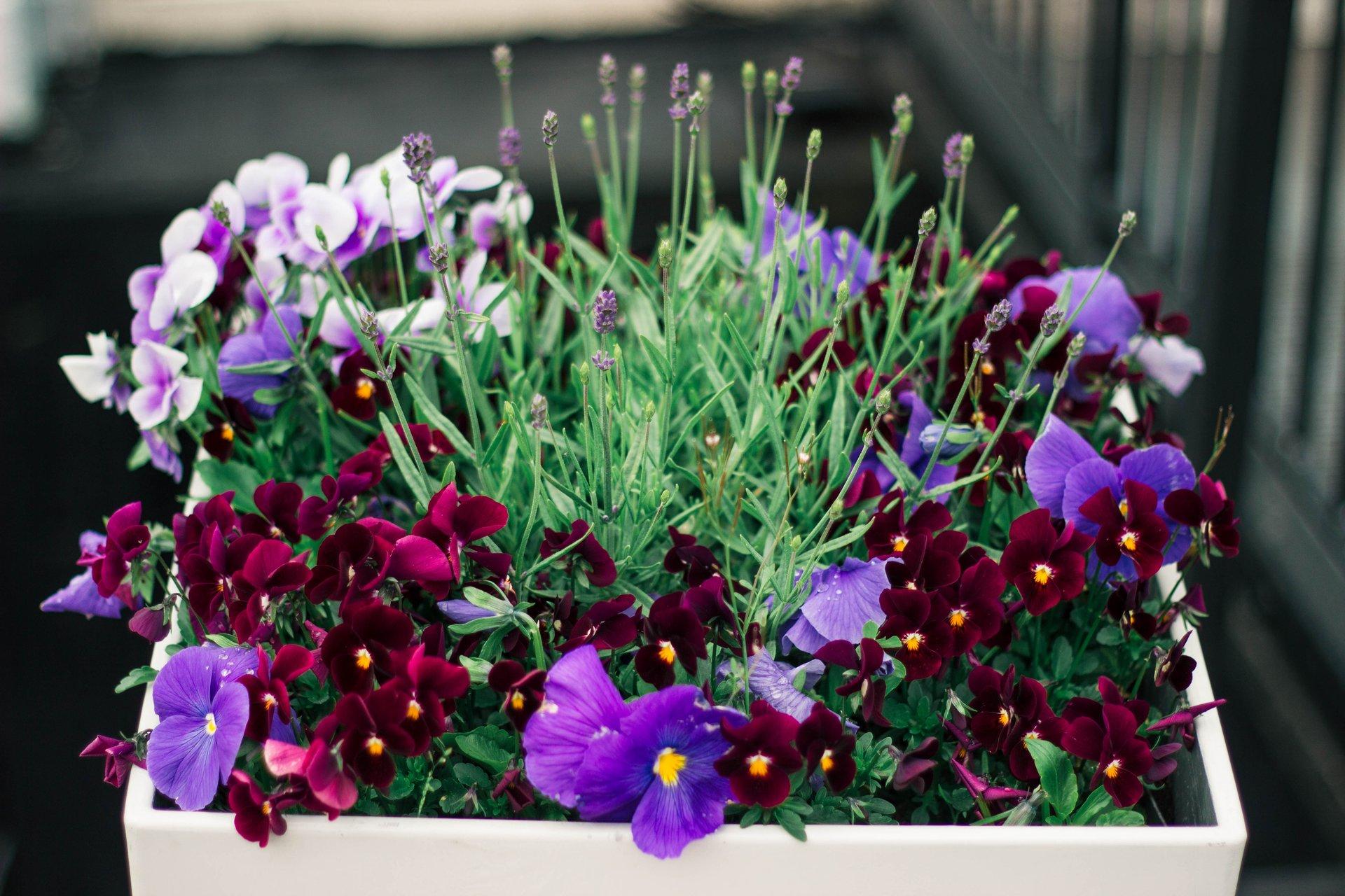 plans for raised planter box