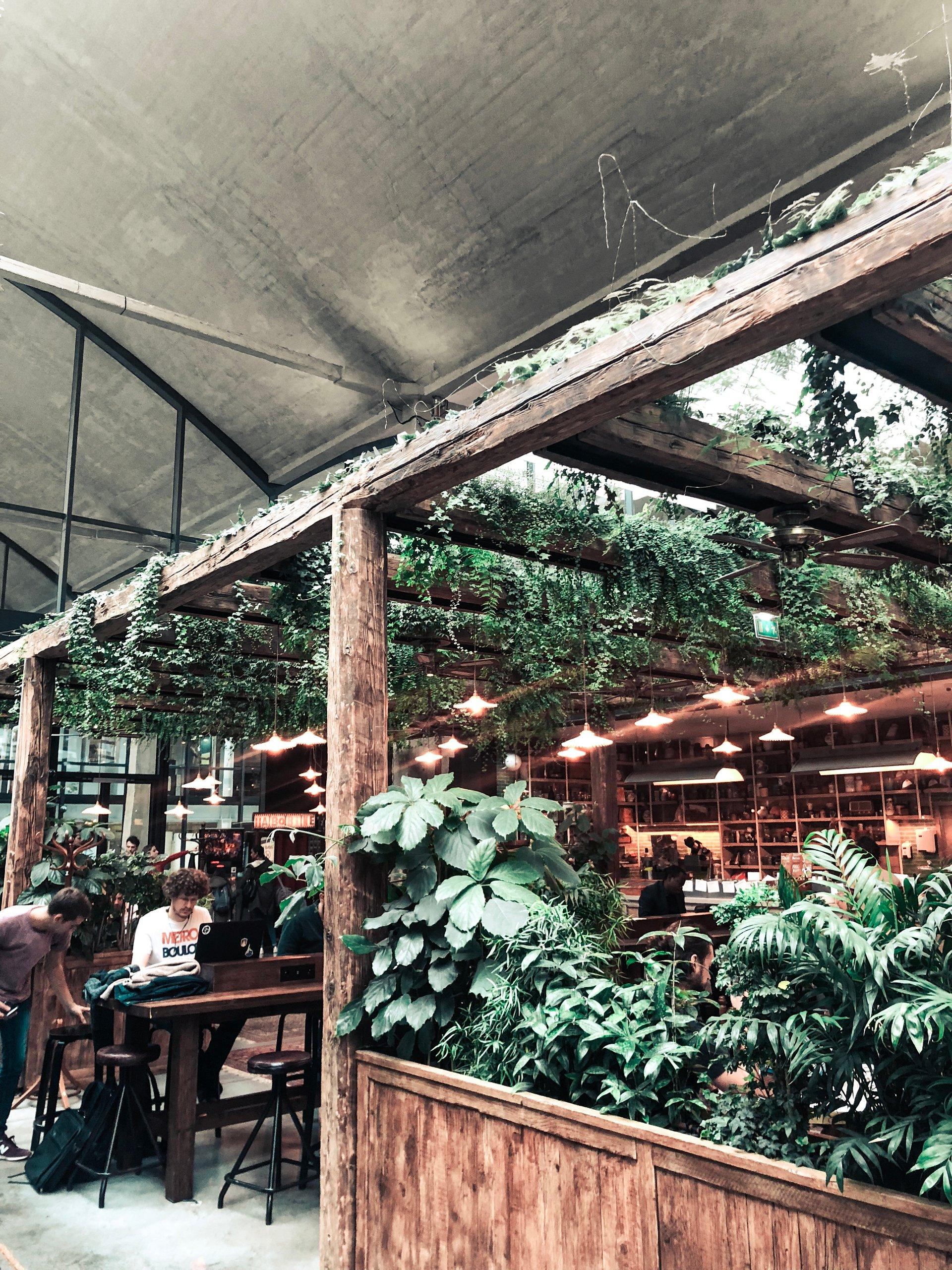 plant decor in home