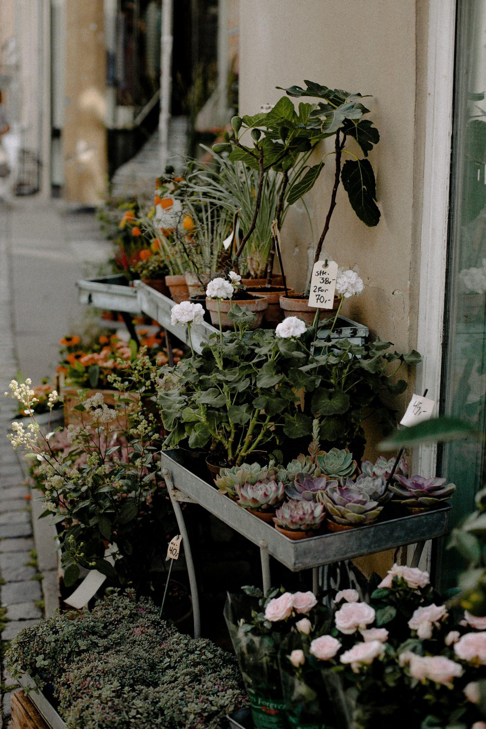 plant for home decor
