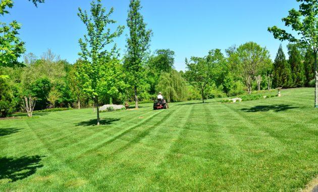 tree grass structure field lawn meadow