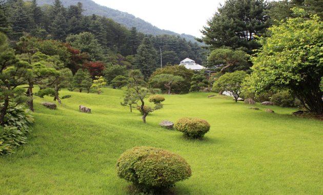 tree grass structure lawn meadow backyard 1