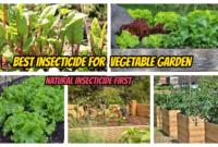 Best Insecticide for Vegetable Garden