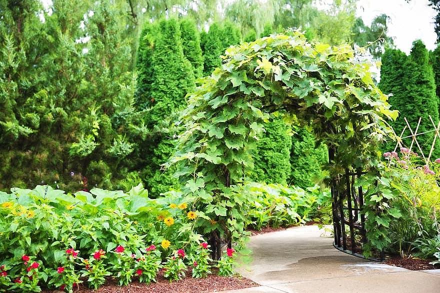 arbor trellis ivy entrance garden green nature park pergola