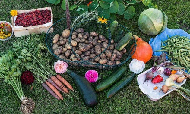autumn harvest garden vegetables vegetable garden fruit potatoes carrots pumpkin