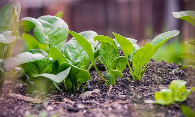 green plan food vegan spinach planning eco natural nature