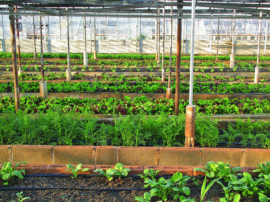 greenhouse agriculture farm urban farming gardening garden local food growing vegetable
