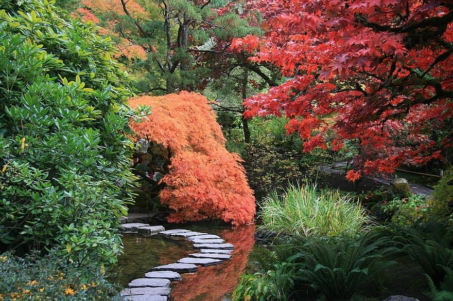 japanese garden path trees nature