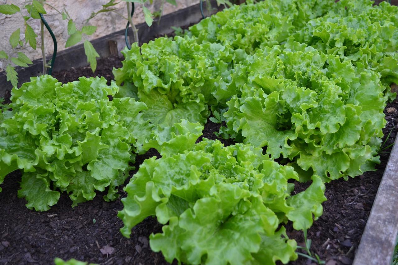 Best Insecticide for Vegetable Garden natural vegetable garden