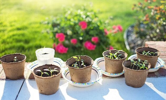 seedlings planting gardening green growing spring sprout organic fresh