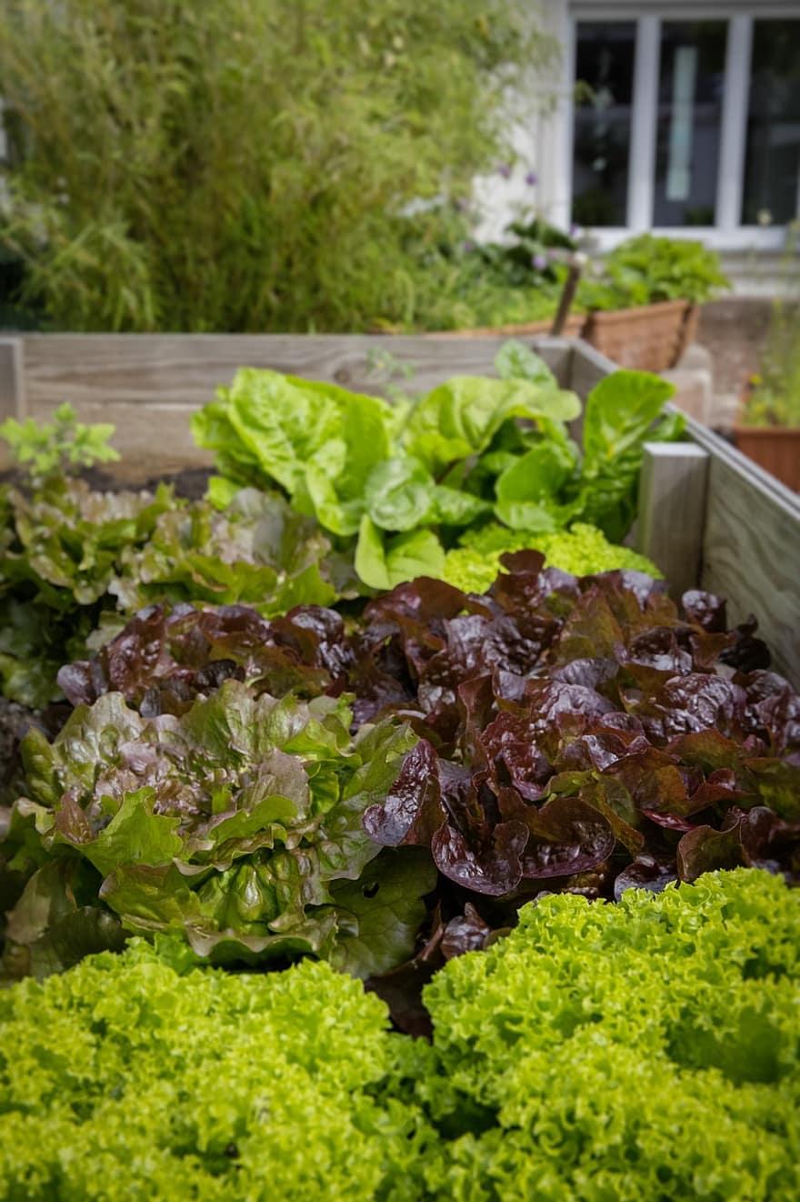 urban gardening locavore regional bio healthy salad vegetables local cultivation