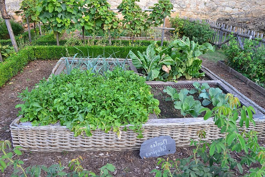 vegetable garden medieval garden chateau de castelnaud castelnaud chapel chard leeks cabbage